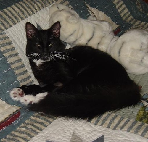 A black and white kitten sleeping on a bed next to a stuffed tiger