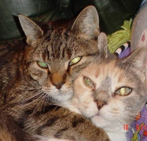 Two cats cuddling together in a cat bed